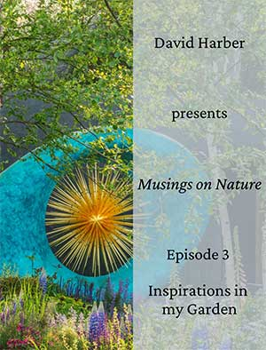 David Harber discusses the inspiration he takes from his own garden